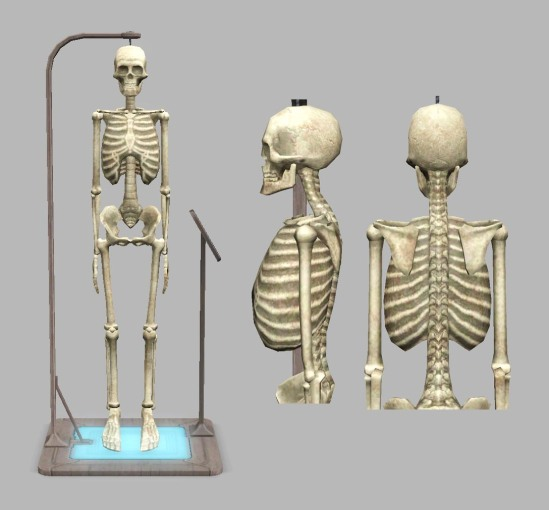 Anatomy skeleton for The Sims 3: University